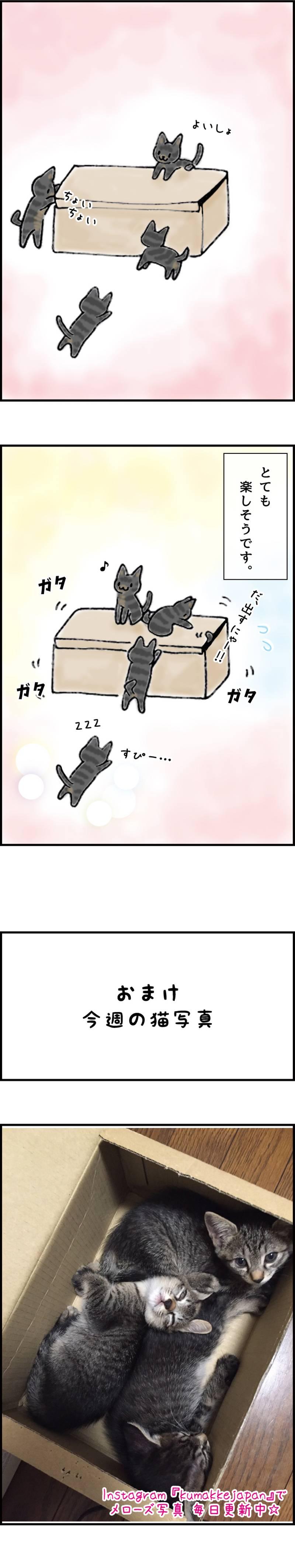 くまコミ 第23話