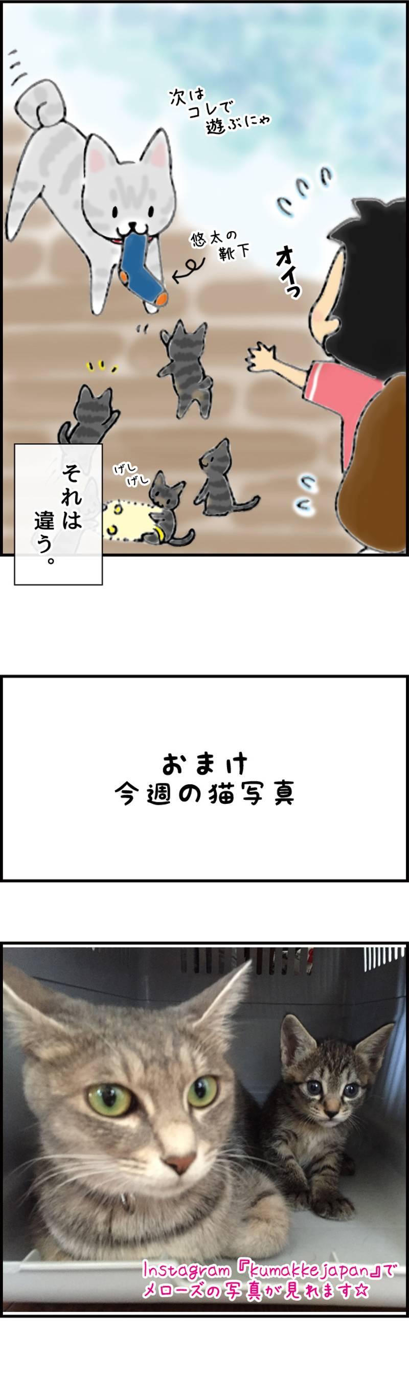 くまコミ 第24話