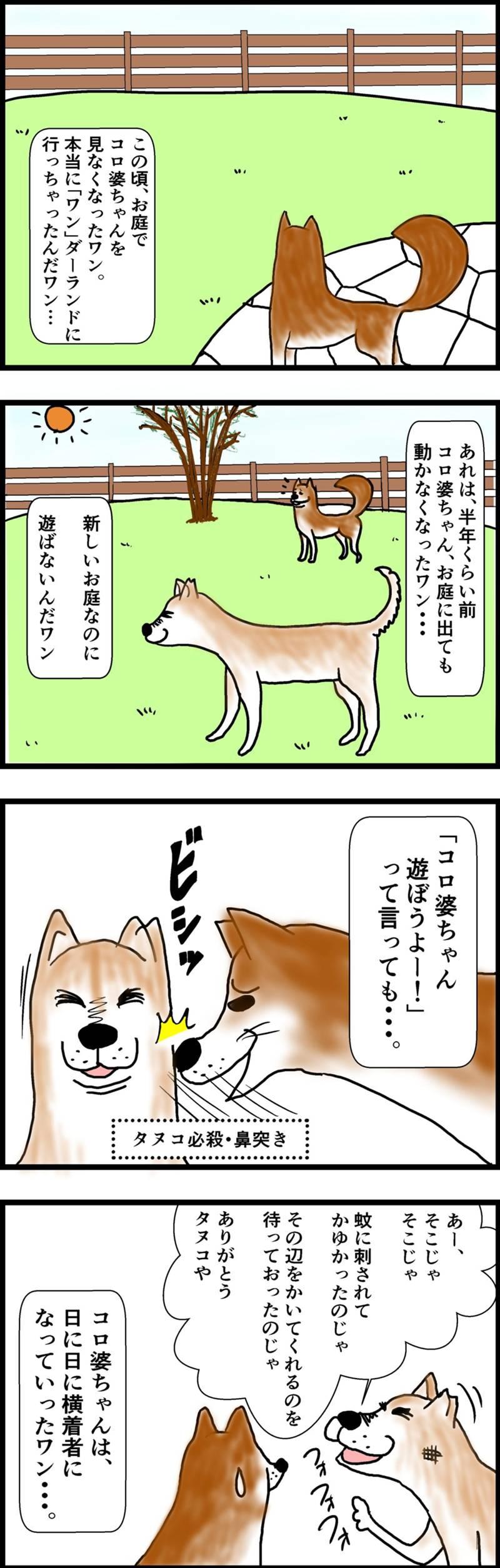タヌコロリ 第1話